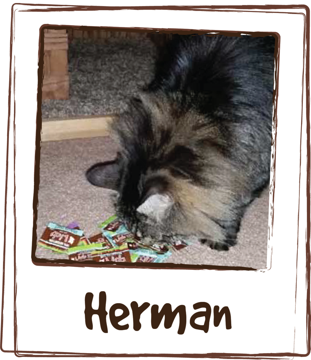 """My senior male cat, Herman, was suffering from constant urinary tract problems. Not only did LICKS® help with the one he had when we first started him on LICKS®, he has not had one since! The Vet had him on an almost constant regimen of antibiotics, which were wearing on his immune system and nearly impossible to get him to swallow. She also suggested changing his diet to a food with UT fighting ingredients – with my fickle cat this was never going to happen – since he will only eat one type of food. I am so happy to have found this product and not have had to change his regular diet in the process!"""