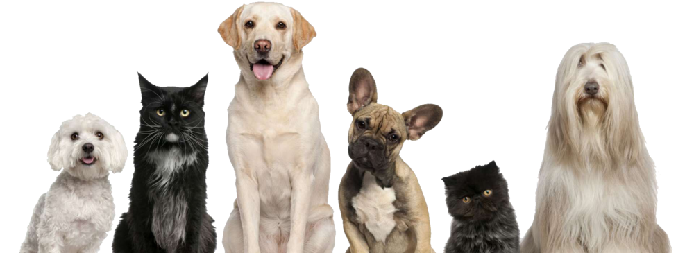 pets family_png.png