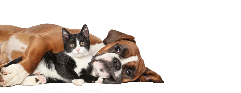 dog & cat banner_PNG.png