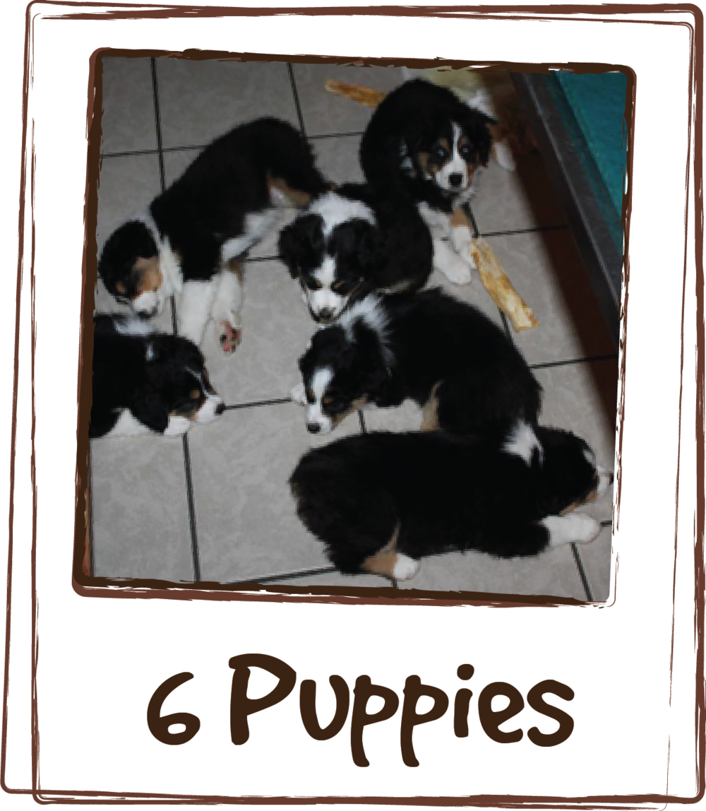 """Experiment successful! 6 puppies, 7.5 weeks old. LICKS® ZEN™ given 15 minutes prior to car ride. They were total angels at the eye doctor. Hardly any whining in the car, slept through their time at the clinic and slept on the way home. Yay for LICKS®!"""
