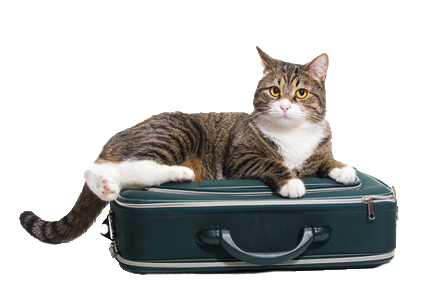 Traveling Cat_png.png