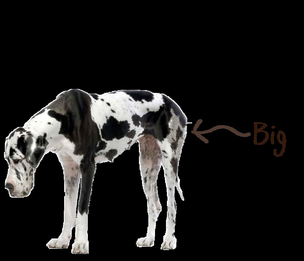 Dog_Big.png