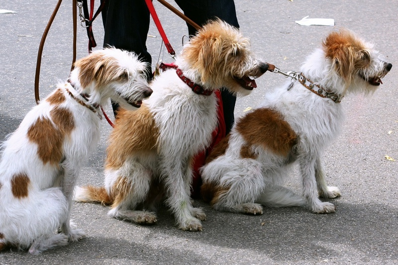 dog-walking-leashes.jpg