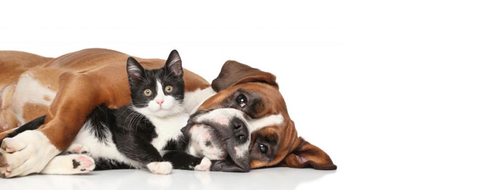 dog & cat banner.png