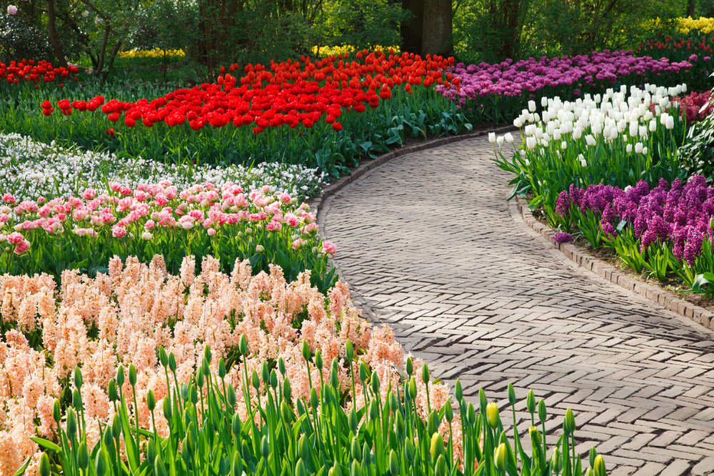 path-among-flowers.jpg