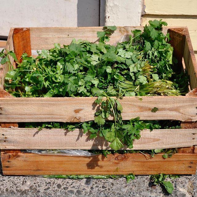 A summer picture...cilantro delivery! 🌱🌞 . . #cilantro #restaurantlife #hudsonvalleyeats #santafeuptown #santafehudsonvalley #santafewoodstock