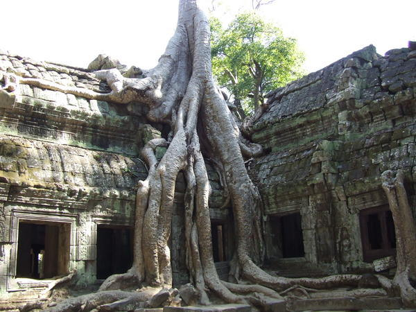 812275-Tree-overgrown-temple-Ta-Prohm-0.jpg