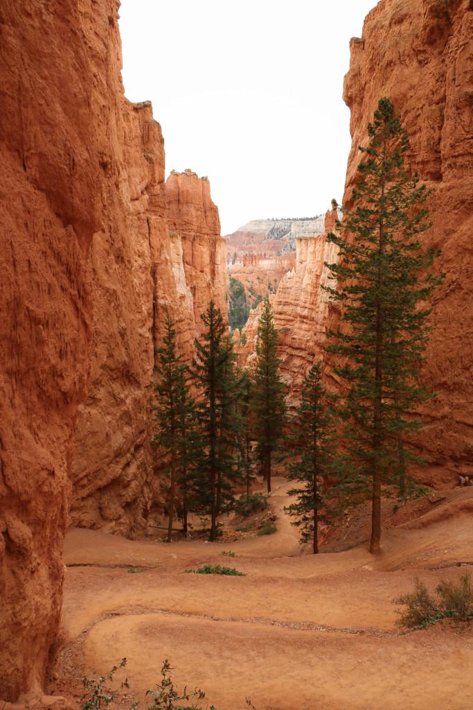Bryce Canyon's Top Natural Wonders