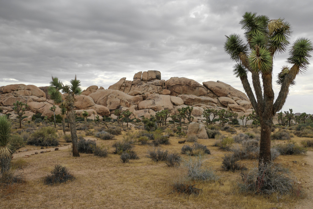 Desert Escape: In Search of Joshua Trees and Salvation