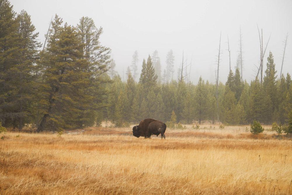 5 Reasons to Visit Yellowstone National Park