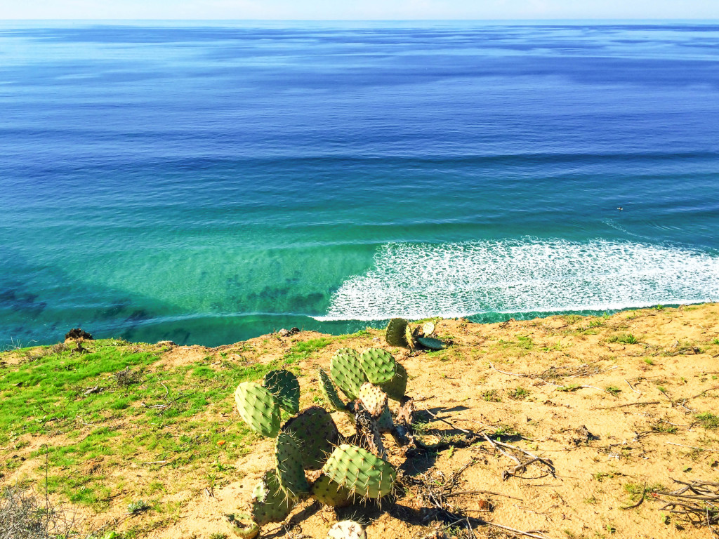 Why should you visit Torrey Pines State Natural Reserve? Because it's one of California's hidden gems!