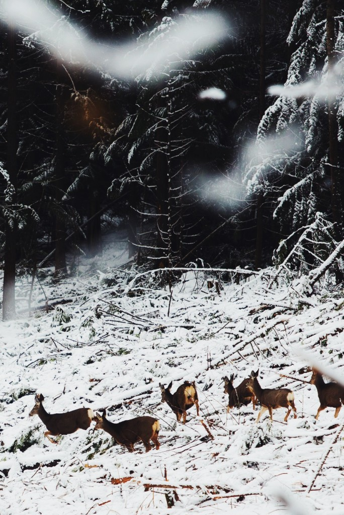 Finances with Wolves: In the Mountains With BC's Anti-Wolf Cull Activist