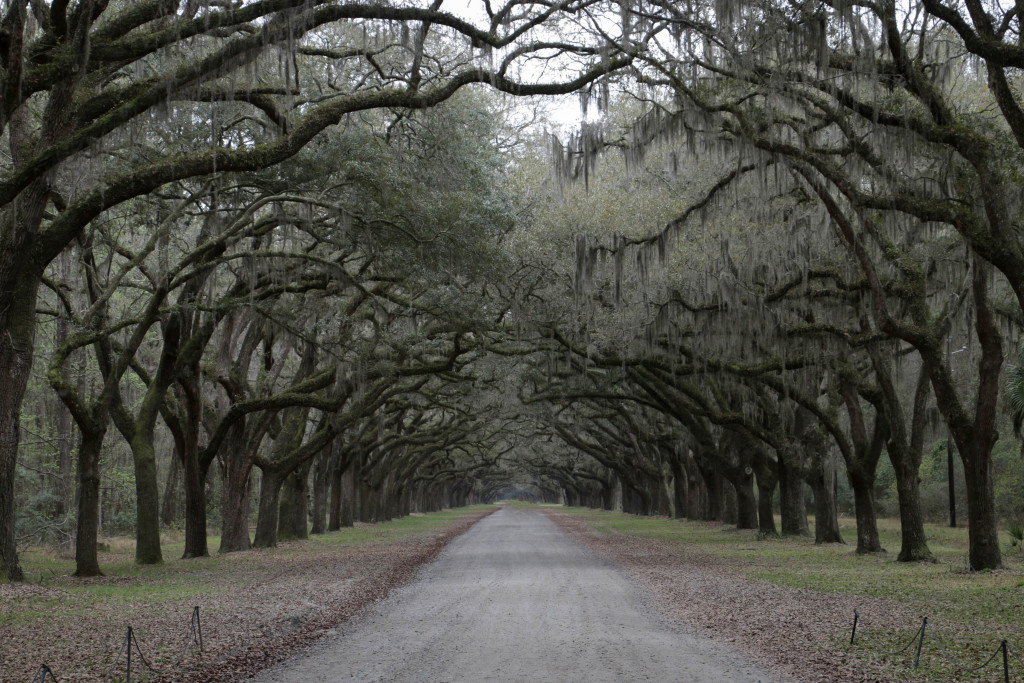 http://www.savannah.com/wormsloe-historic-site/