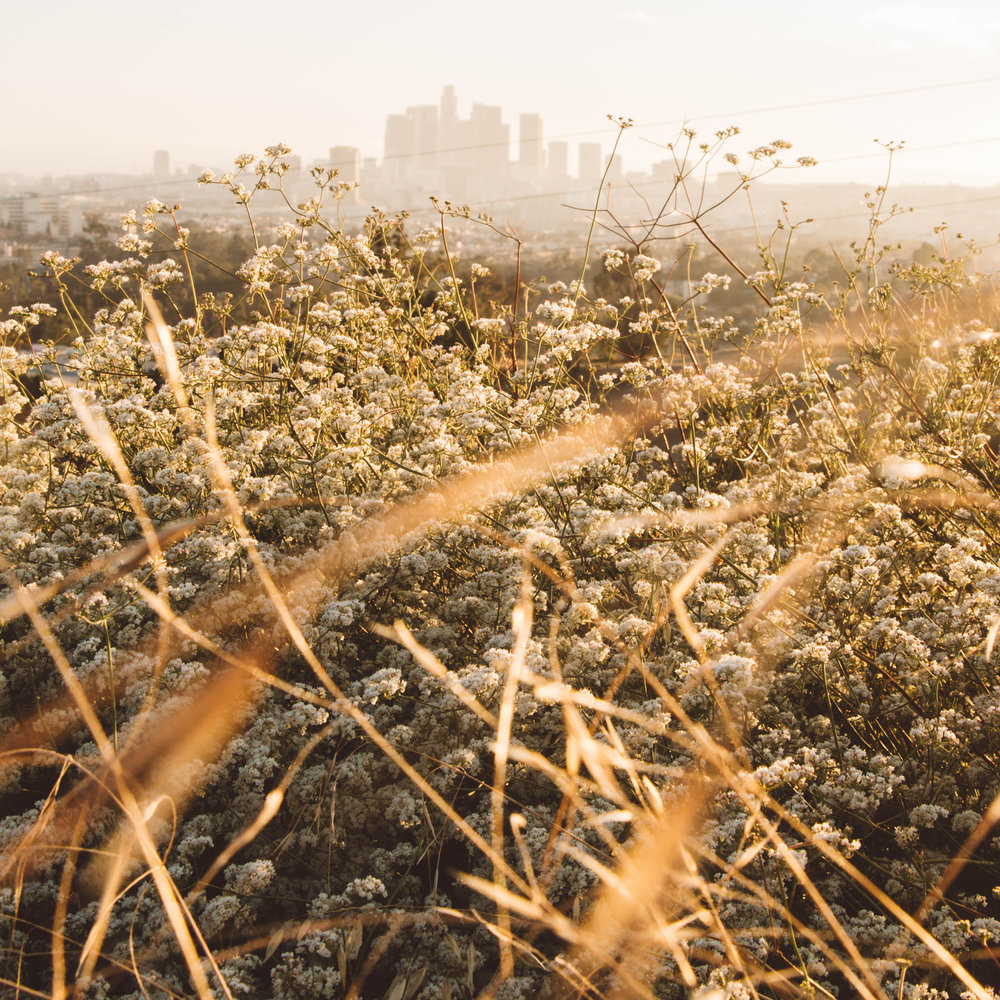 6 Best Places To Photograph Los Angeles Skyline