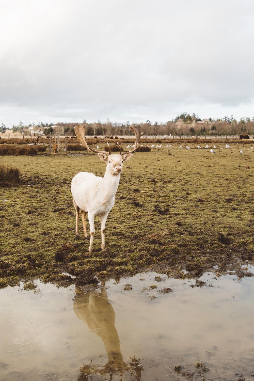 Experience Washington's Olympic Game Farm Through The Lens