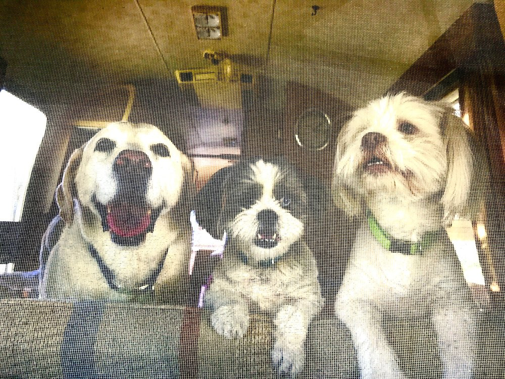 Rebel, Smore and Riley in the first Airstream we renovated (1971 Airstream Sovereign).