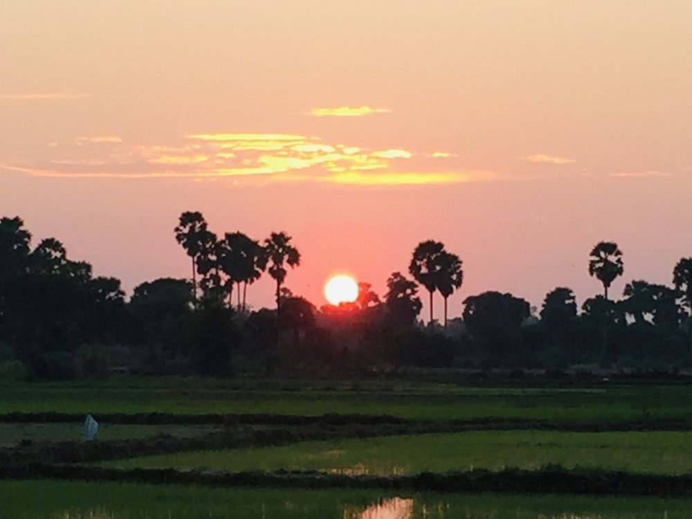 Sunset at paddy field