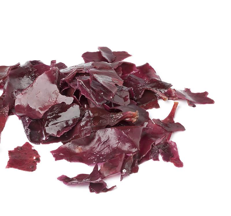 Palmaria palmata - (Dulse/Dilisk/Søl)– frozen, dried or fermented