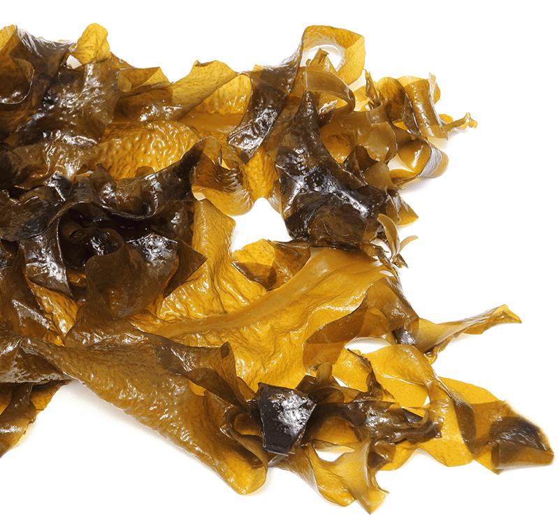 Saccharina latissima - (Winged seaweed/Wakame/Tang)– frozen, dried or ensilaged
