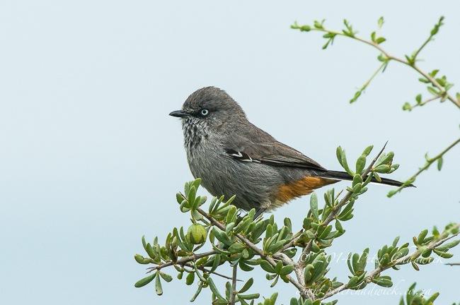 western-cape-birding-route-lamberts-bay-to-langebaan-21-1400232027.jpg