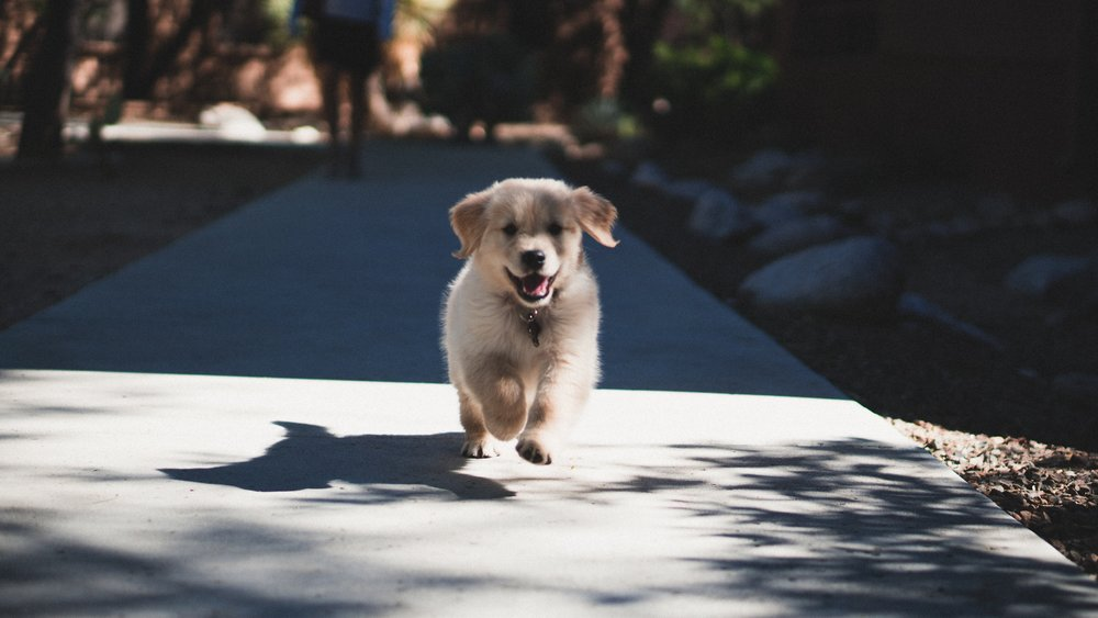 Puppy enjoying a good run in the neighbourhood. Image Credit: Andrew Schultz