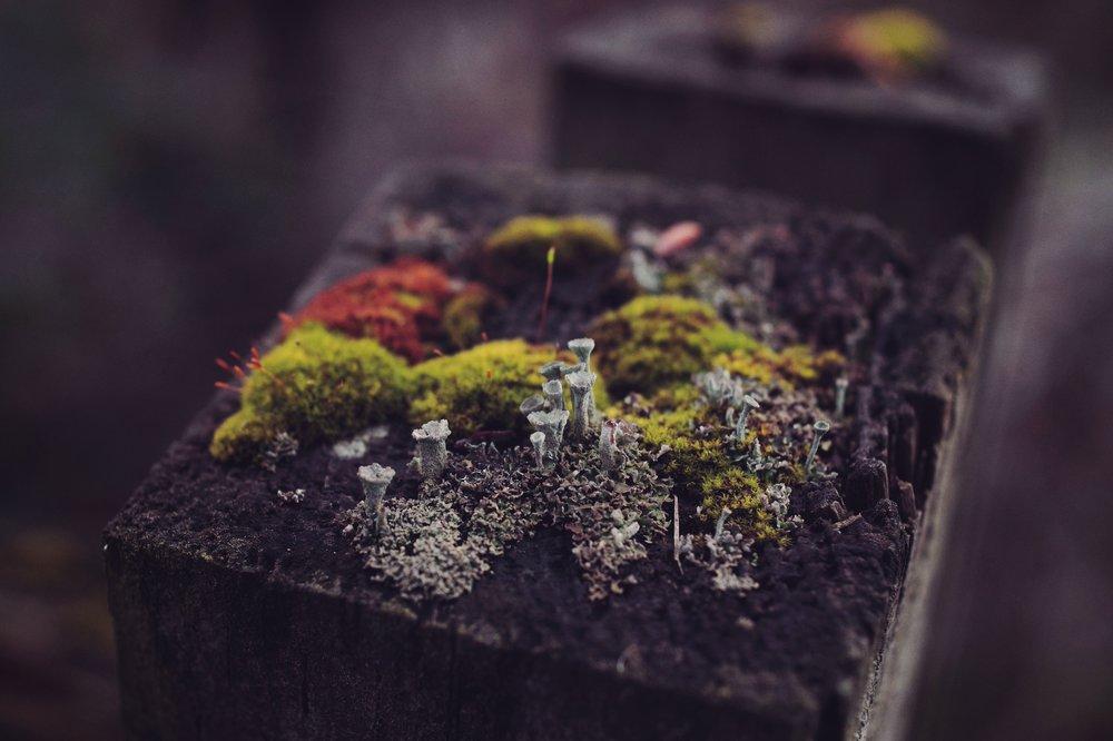 Neighbourly Green Composting Neighbourhoods