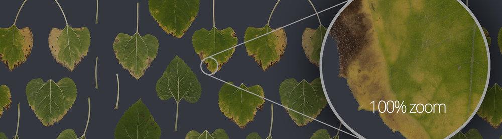 Nature_UHD.jpg