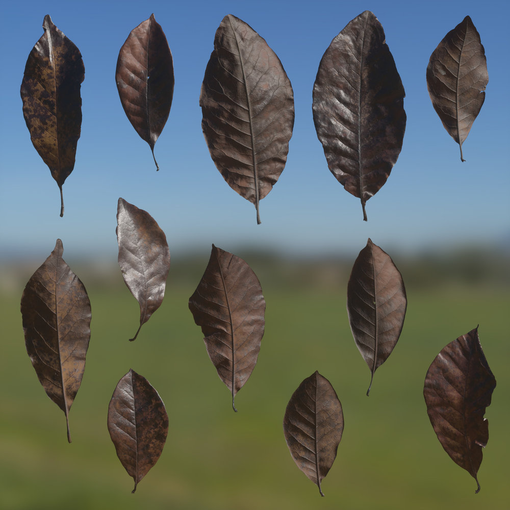 TexturesCom_Magnolia_Leaves_header4.jpg
