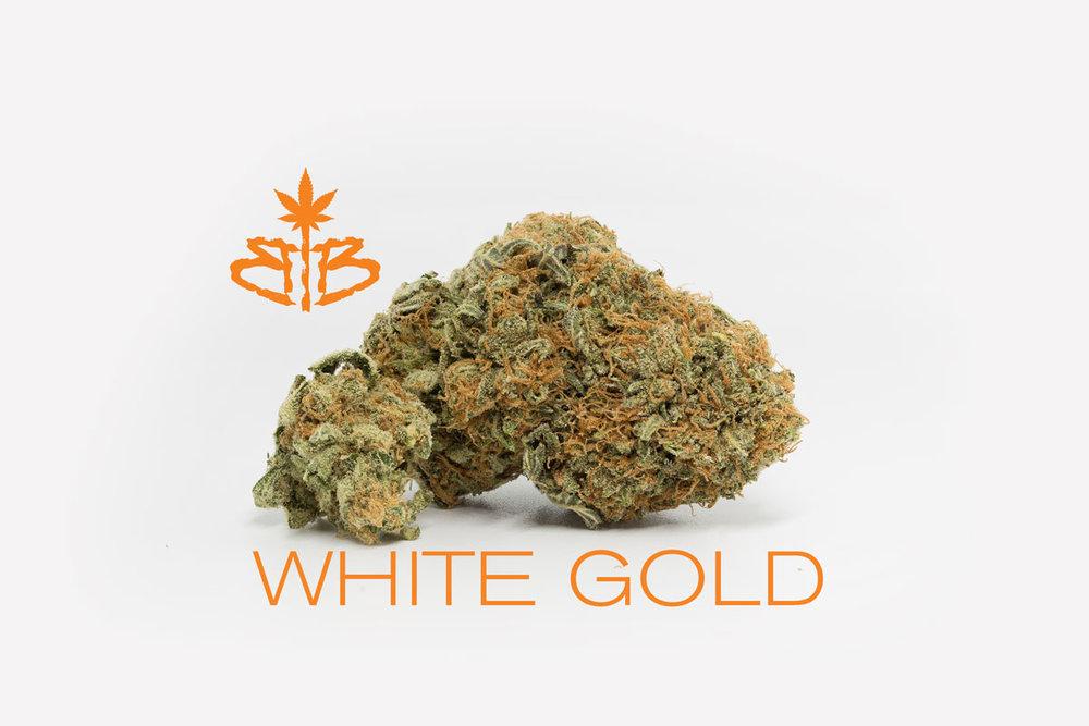 White-Gold.jpg