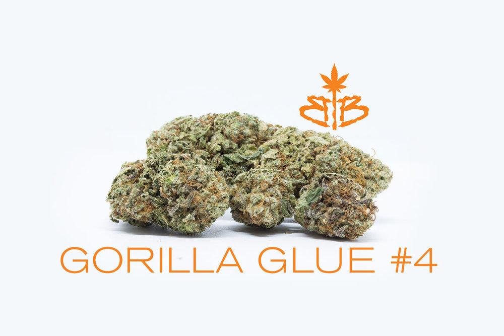 Gorilla-Glue-#4-BB.jpg