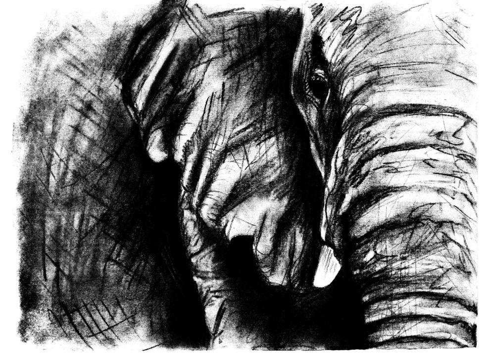 elephant 3.png