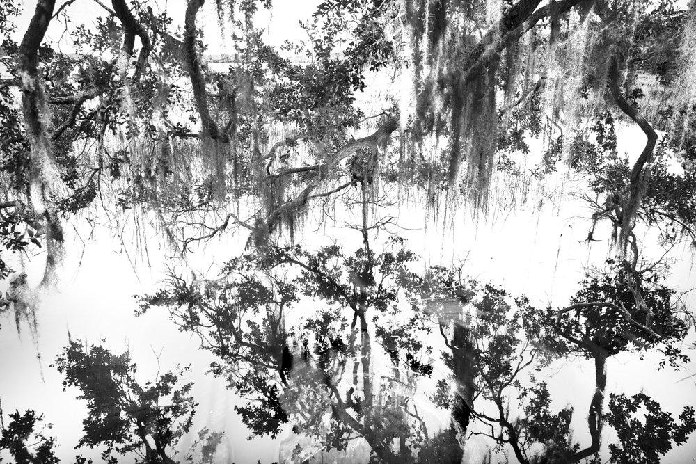 swamp_lace_4.JPG