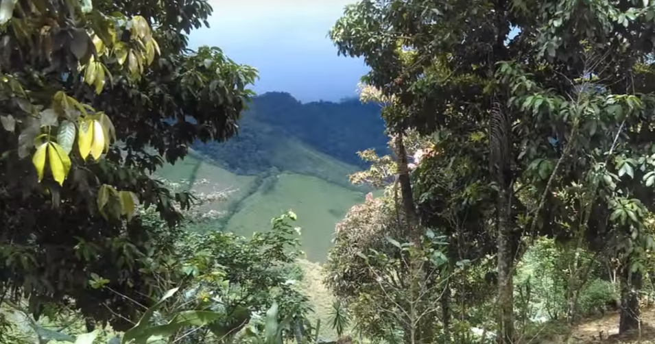Honduras Countryside 2.png