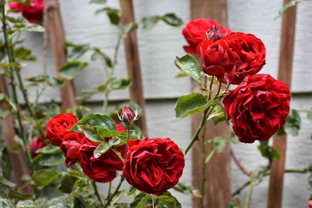Ramblings by Rose
