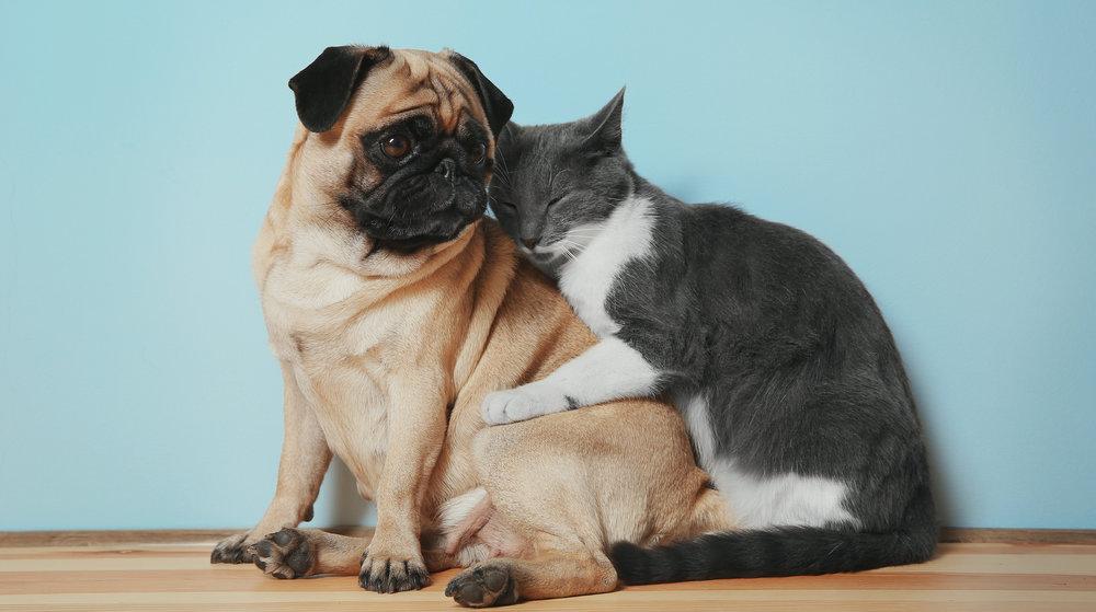 PET FRIENDLY