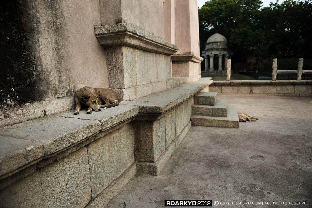 delhi17.jpg
