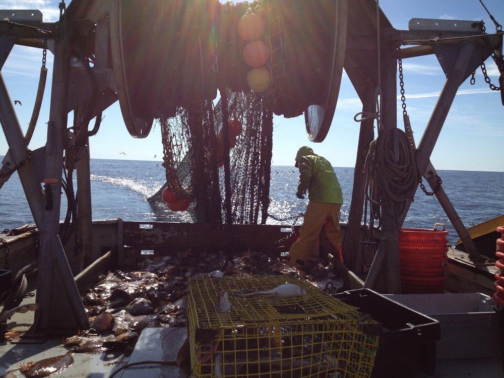 F/V: Joanna hauling flatfish