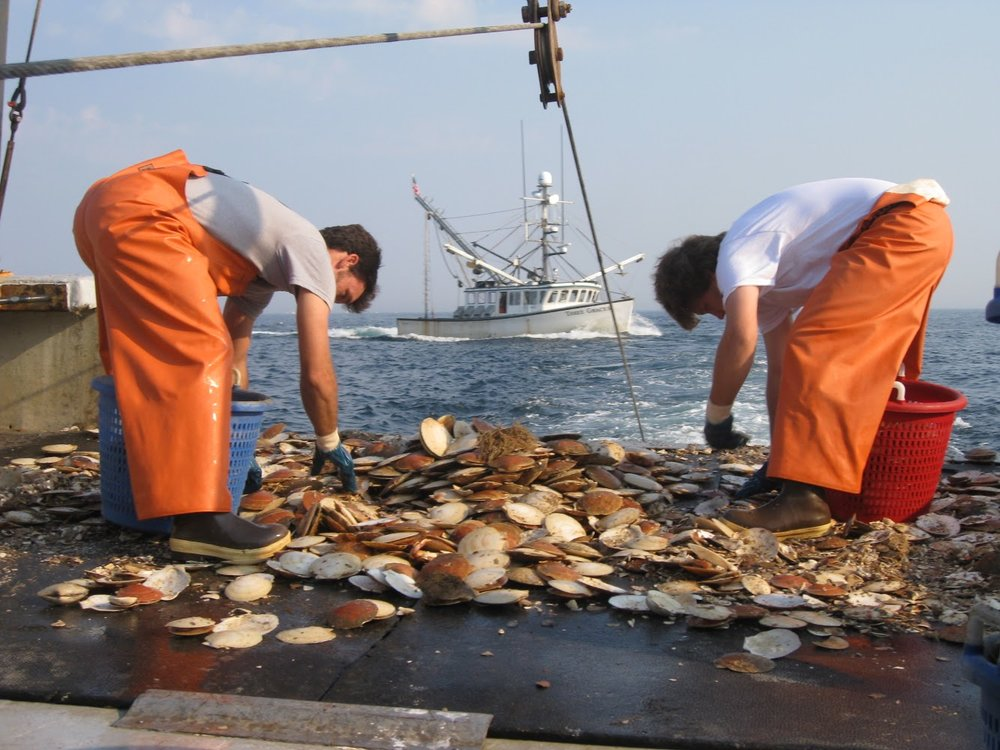 F/V: Bada Bing picking scallops