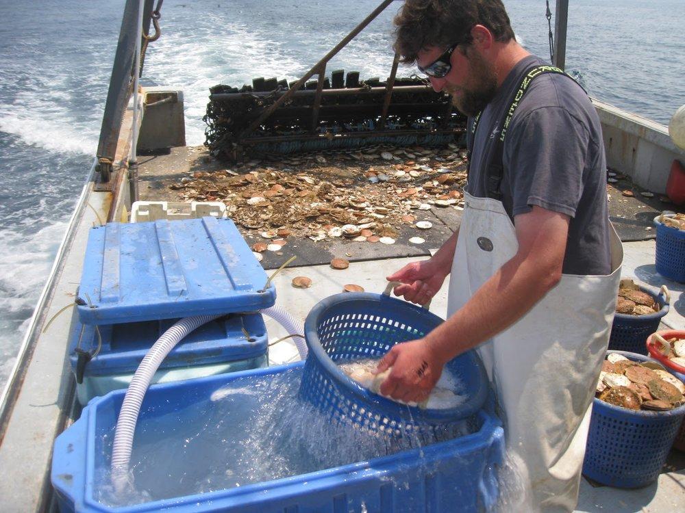 F/V: Bada Bing rinsing scallops