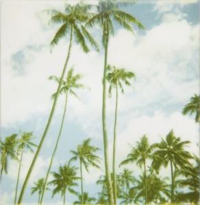palmtrees-292x300.jpg
