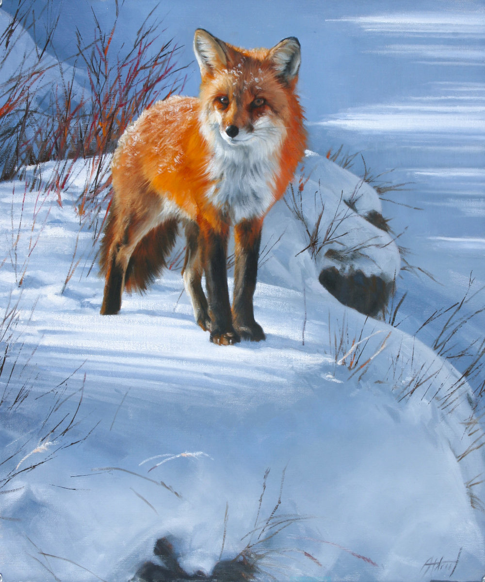 "Red Fox | 24"" x 20"" | Original Oil Painting | $5,300 | By Ed Aldrich"