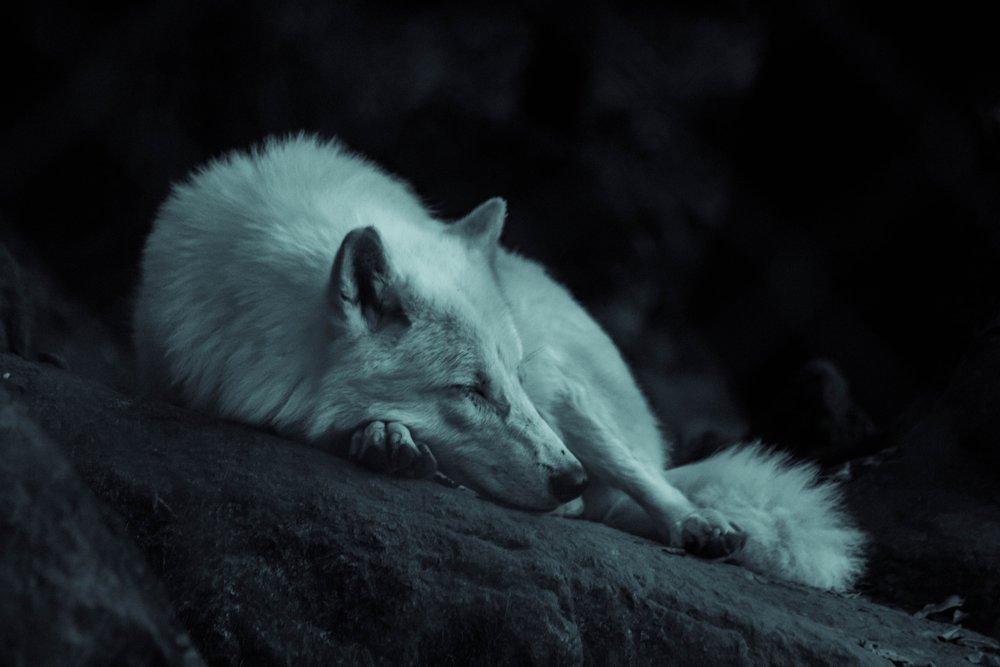White Wolf Valkyrie