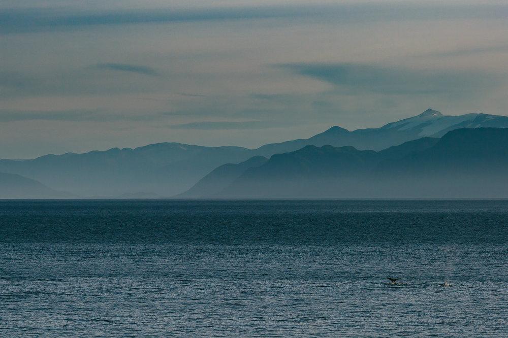 whales_alaska_tiny_house_photo_vacation-1.jpg