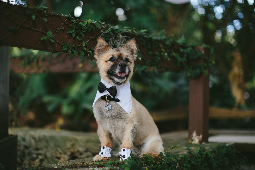 puppy in tux wedding tiny house photo miami
