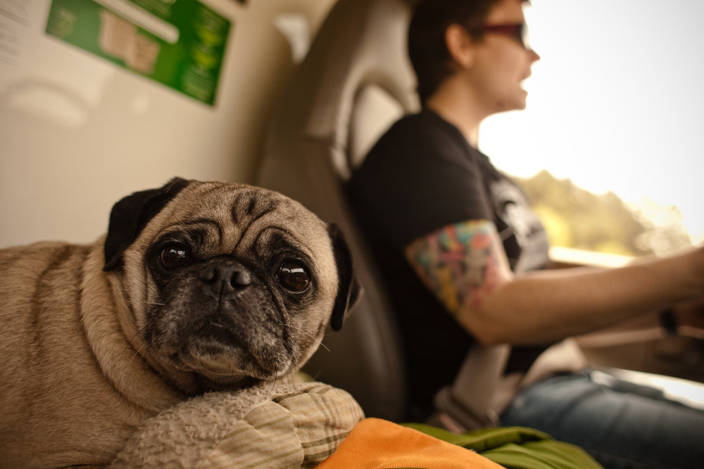 pug_in_uhaul_moving_girlfriend_memories_tattoos_good_times