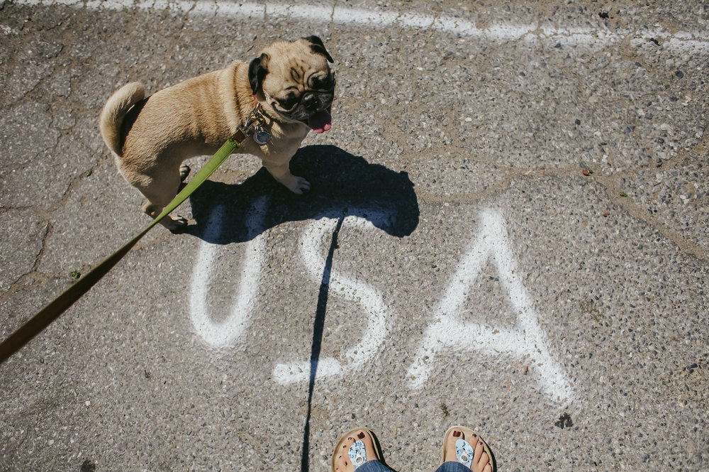 pug with usa grafitti on the ground in miami