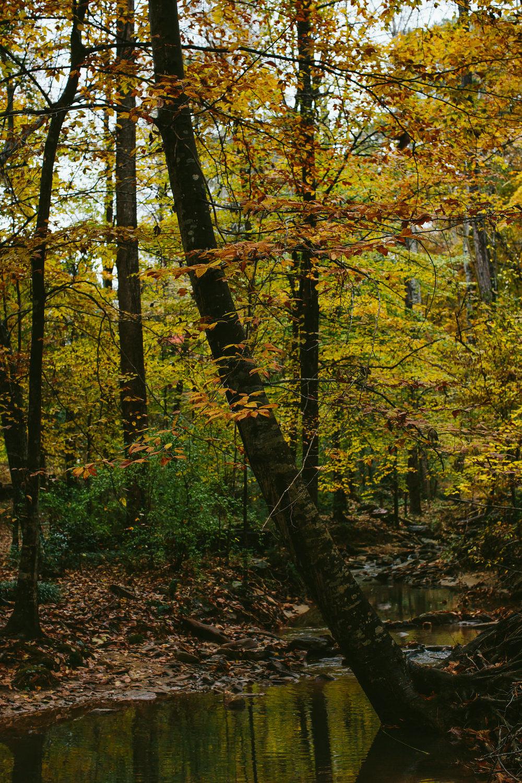 hiking in fall in georgia beautiful forest preserve