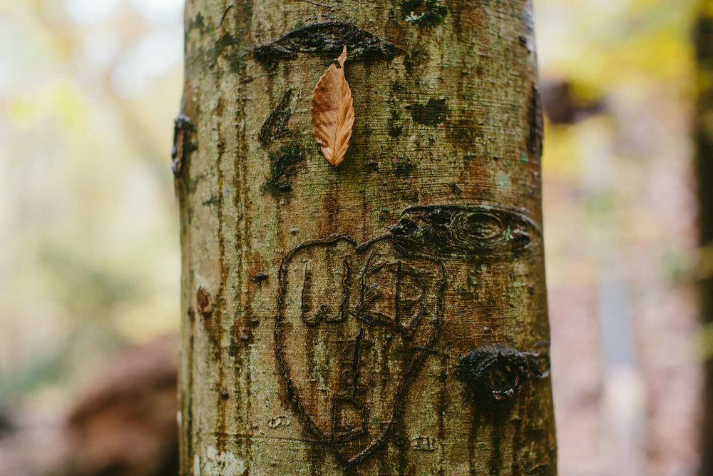 carved tree in georgia