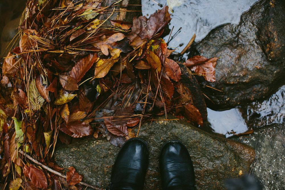 looking_down_leaves_creek_nature_fall_hiking.jpg