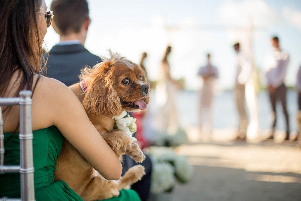 dogs_at_weddings_tiny_house_photo.jpg